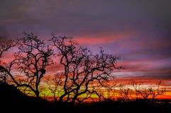 Σκιαγραφία δέντρων ουρανού πυρκαγιάς Στοκ Εικόνες