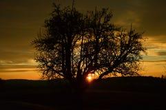 Σκιαγραφία δέντρων στην ανατολή Στοκ φωτογραφία με δικαίωμα ελεύθερης χρήσης