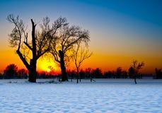 Σκιαγραφία δέντρων στο ηλιοβασίλεμα σε ένα χιονώδες τοπίο Στοκ Εικόνες