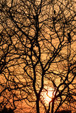 Σκιαγραφία δέντρων στο ηλιοβασίλεμα Στοκ εικόνες με δικαίωμα ελεύθερης χρήσης