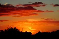 Σκιαγραφία δέντρων στο φως ηλιοβασιλέματος Στοκ φωτογραφία με δικαίωμα ελεύθερης χρήσης