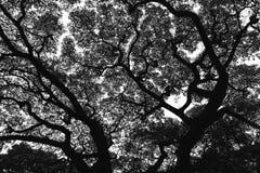 Σκιαγραφία δέντρων στοκ εικόνα με δικαίωμα ελεύθερης χρήσης