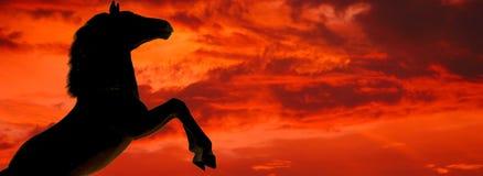 σκιαγραφία αλόγων Στοκ φωτογραφία με δικαίωμα ελεύθερης χρήσης