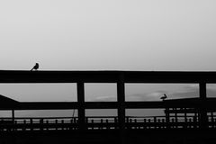 Σκιαγραφία ανατολής Στοκ φωτογραφίες με δικαίωμα ελεύθερης χρήσης