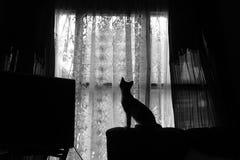 Σκιαγραφία γατακιών Στοκ εικόνες με δικαίωμα ελεύθερης χρήσης