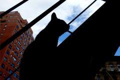 Σκιαγραφία γατών Στοκ Φωτογραφία