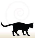 Σκιαγραφία γατών Στοκ φωτογραφίες με δικαίωμα ελεύθερης χρήσης