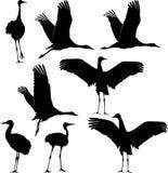 Σκιαγραφία γερανών Στοκ Φωτογραφίες