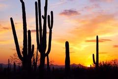 Σκιαγραφία γιγαντιαίου Saguaro Στοκ Εικόνες