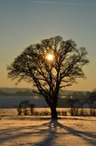 Σκιαγραφία δέντρων ηλιοβασιλέματος Στοκ Εικόνα