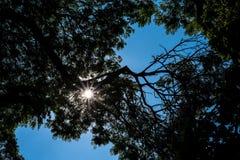 Σκιαγραφία δέντρων με το μπλε ουρανό φωτός του ήλιου Στοκ Φωτογραφία
