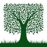 Σκιαγραφία δέντρων που απομονώνεται στο άσπρο υπόβαθρο Διανυσματικό Illustratio διανυσματική απεικόνιση