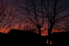Σκιαγραφία δέντρων στο ηλιοβασίλεμα στην πόλη στοκ εικόνα