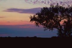 Σκιαγραφία δέντρων στο ηλιοβασίλεμα Στοκ φωτογραφία με δικαίωμα ελεύθερης χρήσης