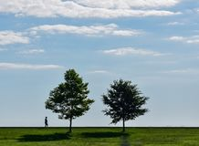 Σκιαγραφία δύο δέντρων στο θερινό ουρανό Στοκ φωτογραφία με δικαίωμα ελεύθερης χρήσης