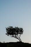 Σκιαγραφία ενός δέντρου ενάντια στον ουρανό βραδιού Στοκ φωτογραφία με δικαίωμα ελεύθερης χρήσης