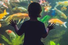 Σκιαγραφία ενός αγοριού που εξετάζει τα ψάρια στο ενυδρείο στοκ εικόνες