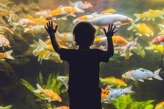 Σκιαγραφία ενός αγοριού που εξετάζει τα ψάρια στο ενυδρείο στοκ φωτογραφίες