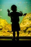 Σκιαγραφία ενός αγοριού που εξετάζει τα ψάρια στοκ εικόνα