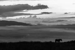 Σκιαγραφία ενός αλόγου σε ένα βουνό στο σούρουπο, με μια θάλασσα της ομίχλης ι στοκ φωτογραφία