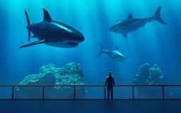 Σκιαγραφία ενός ατόμου που εξετάζει τα ψάρια Στοκ Φωτογραφίες