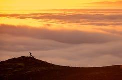 Σκιαγραφία ενός ατόμου στην κορυφογραμμή επάνω από τη θάλασσα των σύννεφων, misty βουνά στο ηλιοβασίλεμα στην Ισλανδία στοκ εικόνα