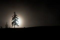 Σκιαγραφία ενός δέντρου πεύκων Στοκ Φωτογραφία