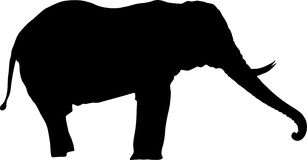 Σκιαγραφία ενός ελέφαντα, στάση, πλάγια όψη, κορμός επάνω διανυσματική απεικόνιση