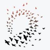 Σκιαγραφία ενός κοπαδιού των πουλιών Μαύρα περιγράμματα των πετώντας πουλιών Πετώντας περιστέρια Δερματοστιξία Στοκ φωτογραφία με δικαίωμα ελεύθερης χρήσης