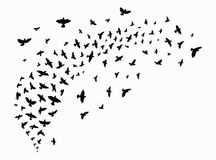 Σκιαγραφία ενός κοπαδιού των πουλιών Μαύρα περιγράμματα των πετώντας πουλιών Πετώντας περιστέρια Δερματοστιξία Στοκ Εικόνες