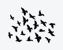 Σκιαγραφία ενός κοπαδιού των πουλιών Μαύρα περιγράμματα των πετώντας πουλιών Πετώντας περιστέρια Δερματοστιξία Στοκ φωτογραφίες με δικαίωμα ελεύθερης χρήσης