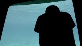 Σκιαγραφία ενός παραγνωρισμένου αγοριού παιδιών με ένα σύντομο κούρεμα κοντά στο μεγάλο παράθυρο παρατήρησης του υποβρύχιου τουρί φιλμ μικρού μήκους