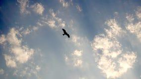 Σκιαγραφία ενός πετάγματος πουλιών Στοκ Εικόνες