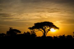 Σκιαγραφία ηλιοβασιλέματος των δέντρων ακακιών στην αφρικανική σαβάνα στοκ εικόνα με δικαίωμα ελεύθερης χρήσης