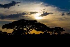 Σκιαγραφία ηλιοβασιλέματος των δέντρων ακακιών στην αφρικανική σαβάνα στοκ εικόνες