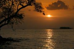 Σκιαγραφία ηλιοβασιλέματος πίσω από το δέντρο στη θάλασσα στοκ εικόνα