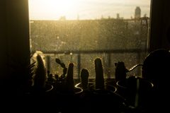 Σκιαγραφία κάκτων στα παράθυρα Στοκ εικόνες με δικαίωμα ελεύθερης χρήσης