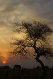 Σκιαγραφία και σκιά δέντρων Στοκ Φωτογραφία