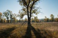 Σκιαγραφία και σκιά ενός δέντρου στο δάσος Στοκ Εικόνες