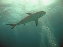 σκιαγραφία καρχαριών Στοκ εικόνες με δικαίωμα ελεύθερης χρήσης