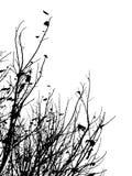 σκιαγραφία κλάδων Στοκ Εικόνες