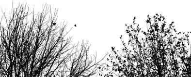 σκιαγραφία κλάδων Στοκ Φωτογραφίες