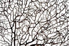 Σκιαγραφία κοραλλιών Στοκ φωτογραφίες με δικαίωμα ελεύθερης χρήσης