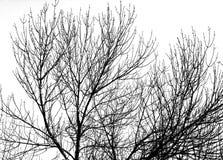 Σκιαγραφία κλάδων δέντρων Στοκ φωτογραφίες με δικαίωμα ελεύθερης χρήσης