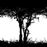 Σκιαγραφία λεπτομέρειας του Μπους Στοκ εικόνες με δικαίωμα ελεύθερης χρήσης