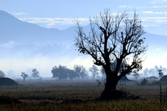 Σκιαγραφία μορφής δέντρων. Στοκ Εικόνες