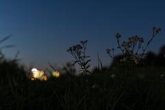 Σκιαγραφία λουλουδιών και χλόης μπροστά από το θερινό ηλιοβασίλεμα Στοκ φωτογραφία με δικαίωμα ελεύθερης χρήσης