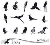 Σκιαγραφία παπαγάλων Στοκ Εικόνες