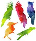 Σκιαγραφία παπαγάλων watercolor Στοκ Φωτογραφία