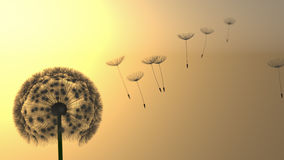 Σκιαγραφία πικραλίδων Στοκ φωτογραφία με δικαίωμα ελεύθερης χρήσης